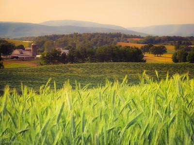 5-22-19: Hay (or is it barley? .. 'tis the season