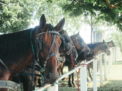 8-18-19: Horses in waiting