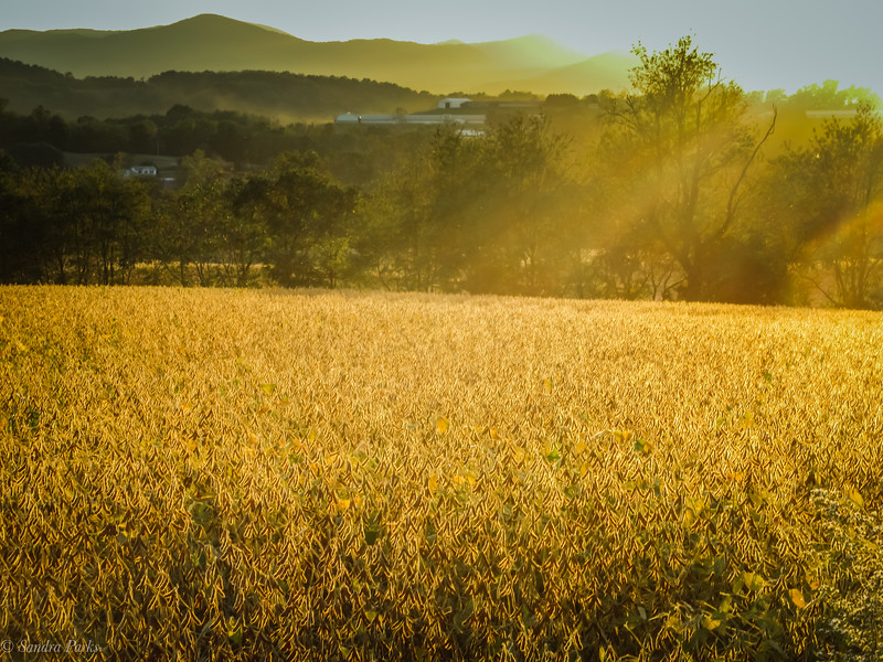 10-11-19: Amber fields, Thomas Spring