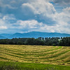 5-27-19: Hay, and the Blue RIdge
