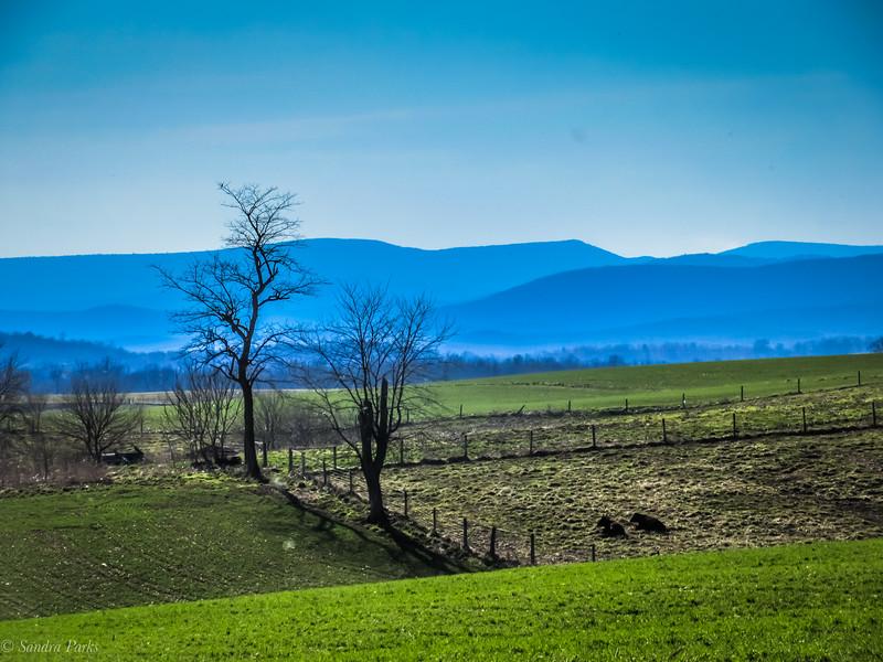 3-19-19:  Allegheies view, Mt. Horeb.
