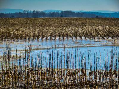 2-2-19: The fields have been flooded. For a long time.
