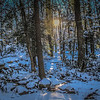 1-25-19:   A light in the forest