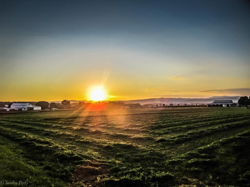 9-4-19; Fresh cut hay