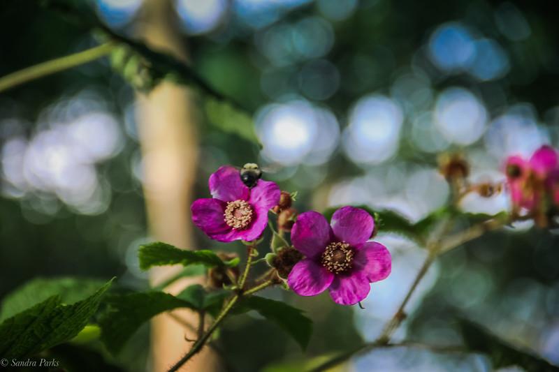 7-9-19: WIld roses