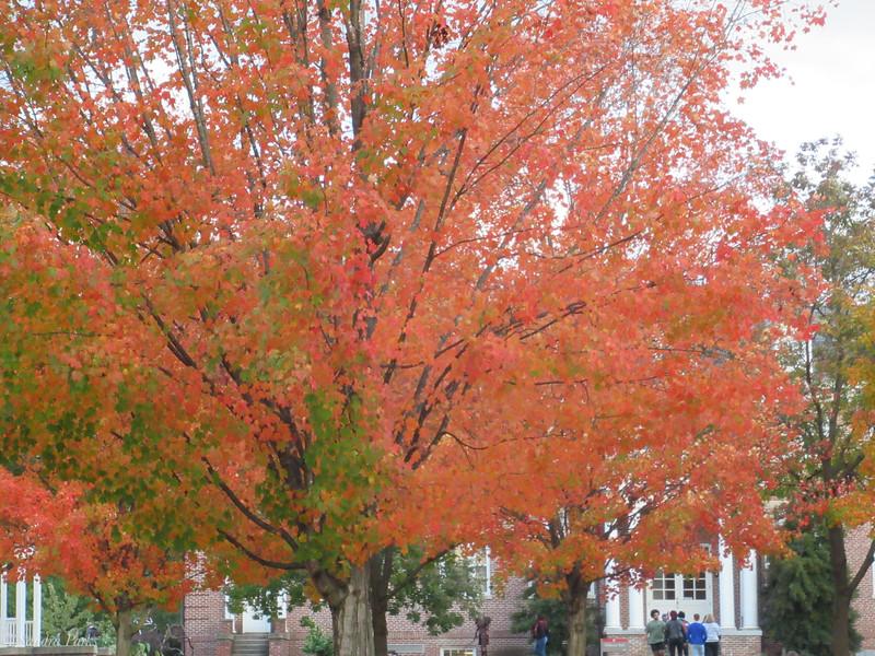 10-16-19: Fall, finally