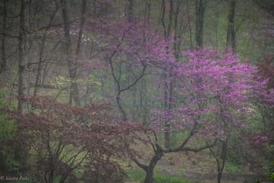4-19-19: in the mist, in the rain, in the arboretum