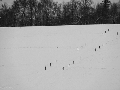 1-14-18: fence rows in snow