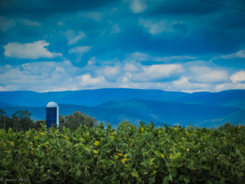 8-31-19: Soybeans, silos, and the Alleghenies