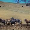 12-16-19: Horses, on a rainy day