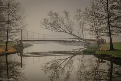 4-13-19: Wildwood in the fog