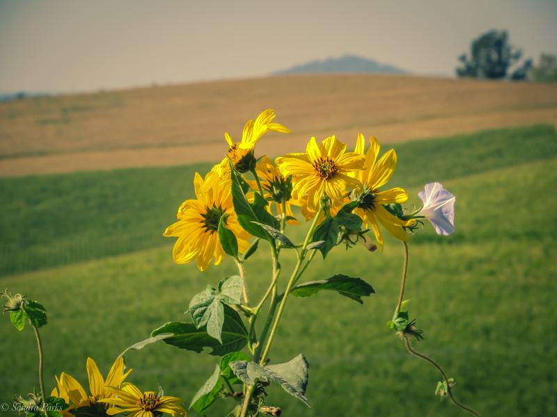 9-22-19: Mole Hill flower