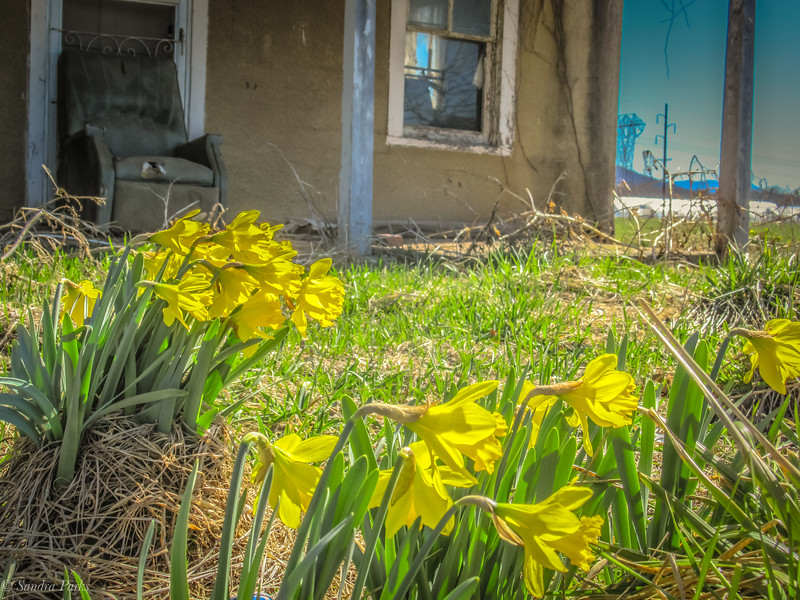 3-23-19: and the daffodils stil remain.
