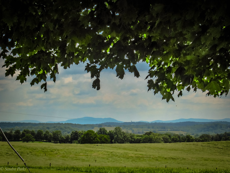 5-26-19: : under a shade tree