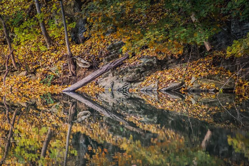 11-10-19: Wildwood reflections