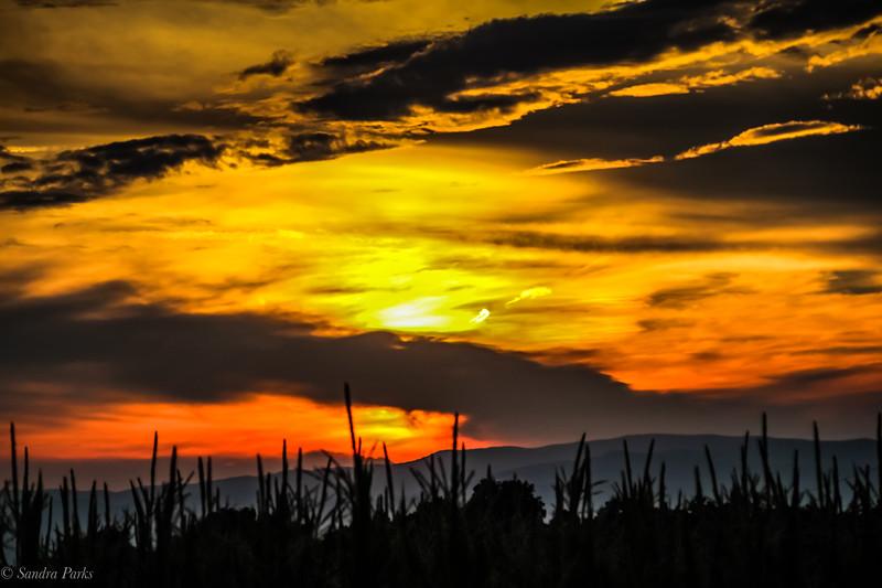 7-15-19: Sunset in a corn field