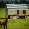 7-11-19: Green barn, and a horse.