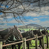 4-20-19: Bank Church horses, and Mole Hill
