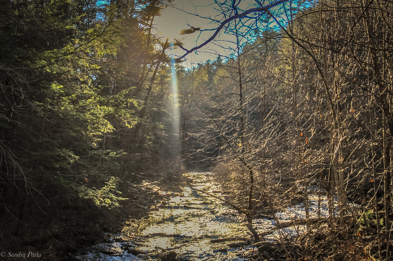 12-15-19: Forest bathing, North River Gorge
