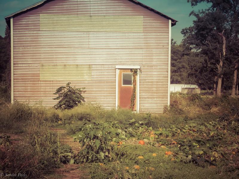 9-27-19: in the pumpkin patch