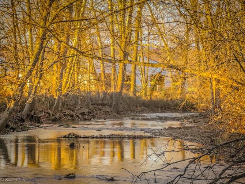 11-25-19: November's golden light, Thomas Spring