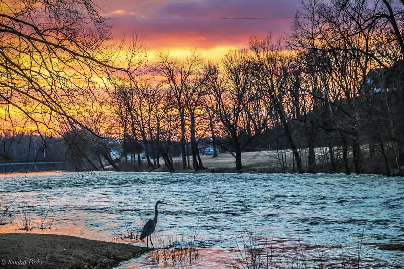 1-25-18: Sunrise Heron Wildwood
