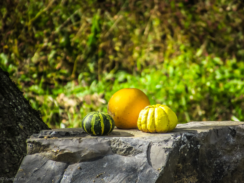 10-19-19: Still life with gours.