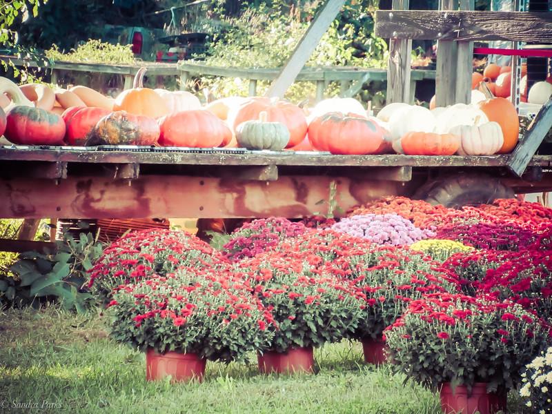 10-9-19: Fall colors
