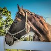 10-9-19: Majestic horse