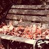10-29-19: A forgotten park bench