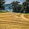 7-3-2020: Hay lines