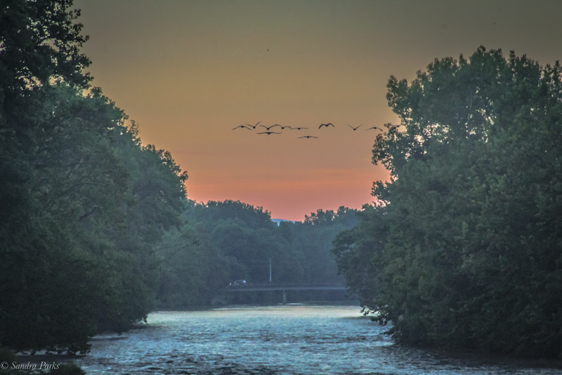 8-18-2020: Sunrise, with geese.