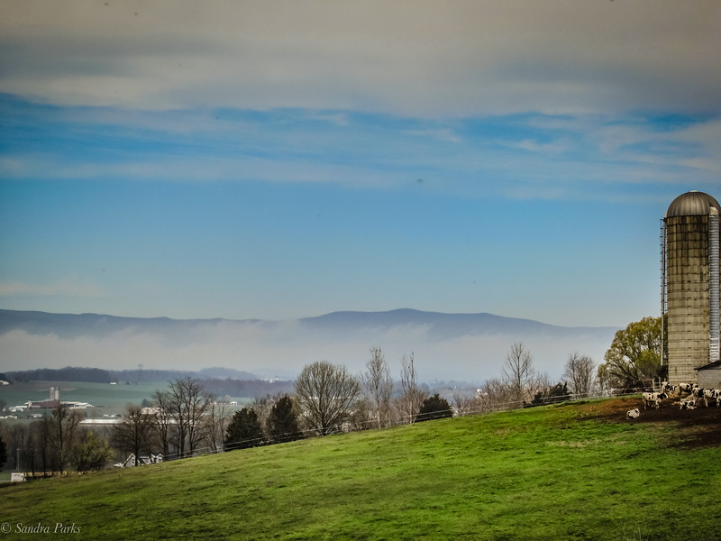 3-29-2020: Clouds lifting, on Cannery Woods