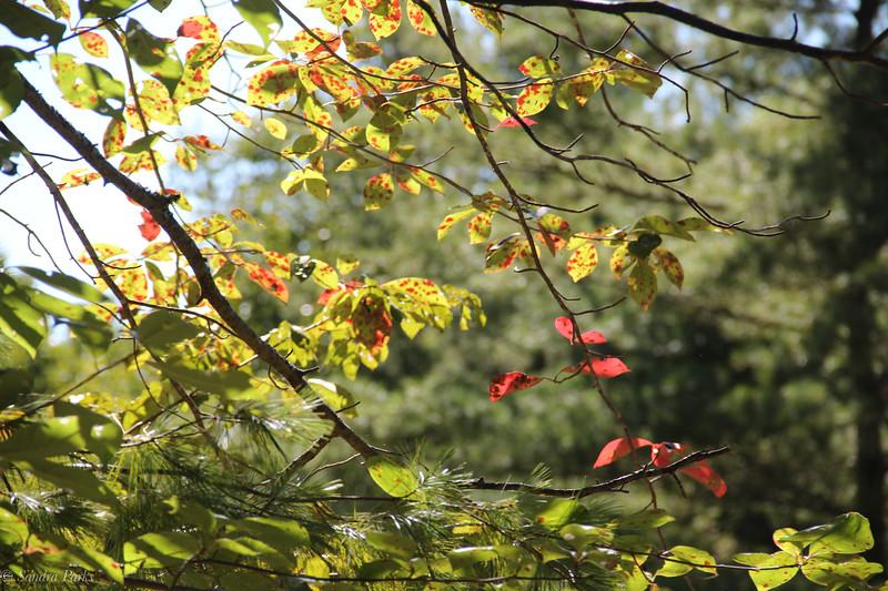 9-20-2020: Hint of fall