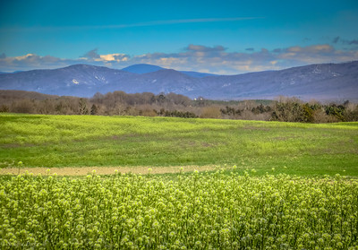 3-26-2020: The Blue Ridge Mountains #wheremybiketookmetoday