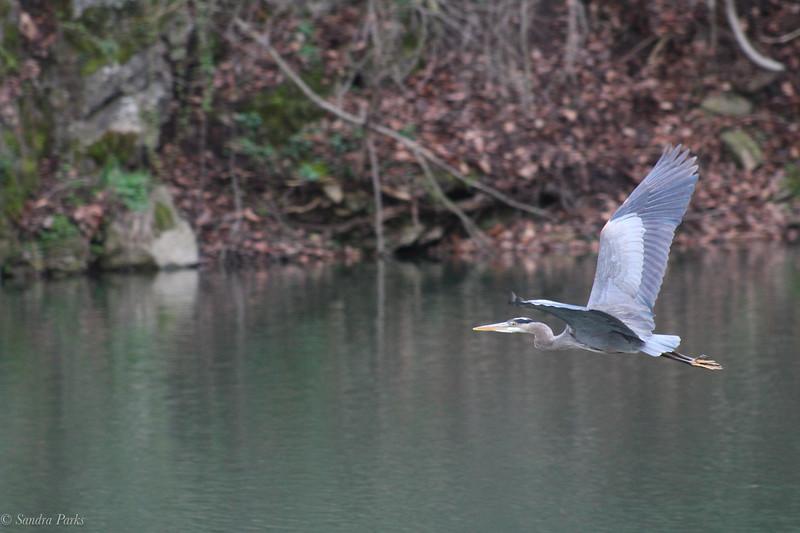 4-01-2020: Heron