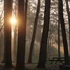 3-19-2020: Light in the park