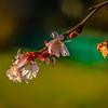 2-14-2020: Budding blossoms