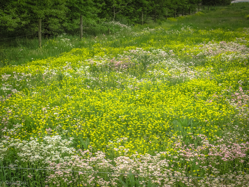 5-17-2020: another showstopper field