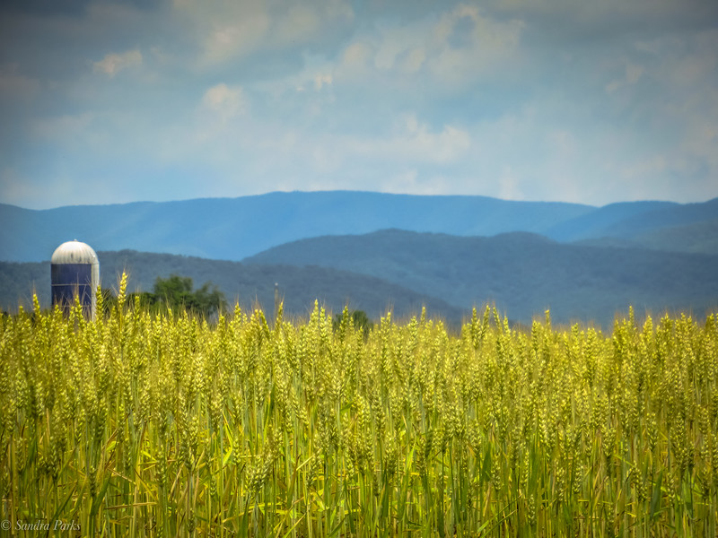 6-06-2020: Hay and the Alleghenies