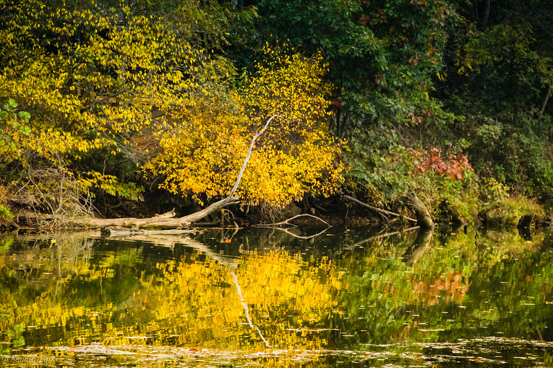10-1102020: Reflections of fall