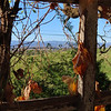 11-4-2020: Through the trellis, Centerville