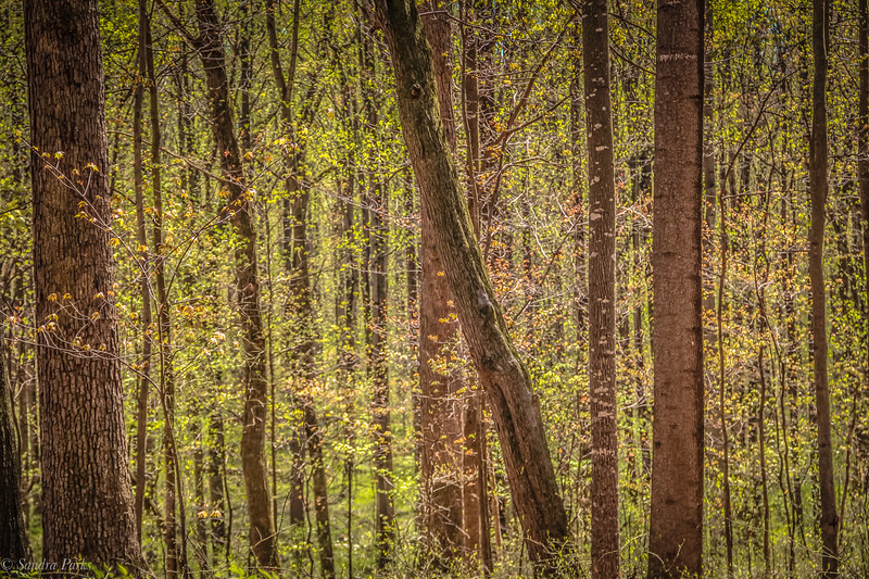 4-18-2020: in the springtimewoods