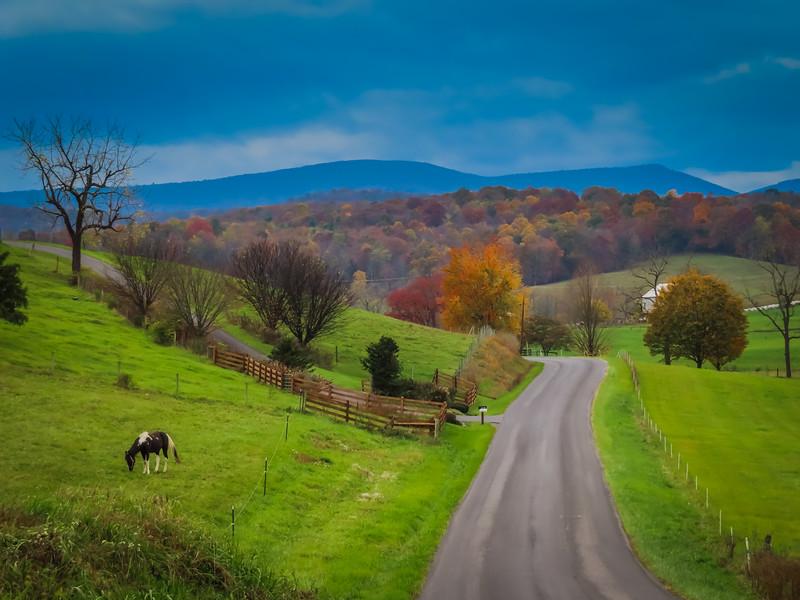 10-28-2020: Autumn colors, Daniel Cupp Road