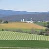 4-19-2020: Fresh cut hay, Coakley Town