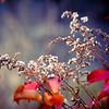 12-4-2020: December's flowers