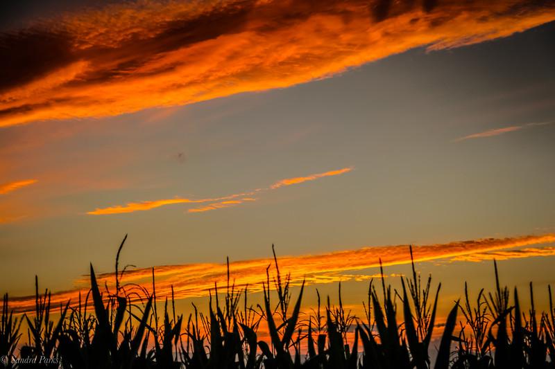 9-4-2020: Sunset in a corn field