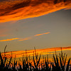 9-4-2020: Sunset in a corn field