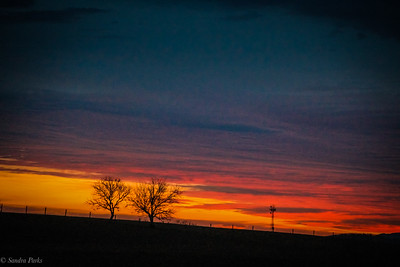 2-12-2020: a splash of color to start the morning