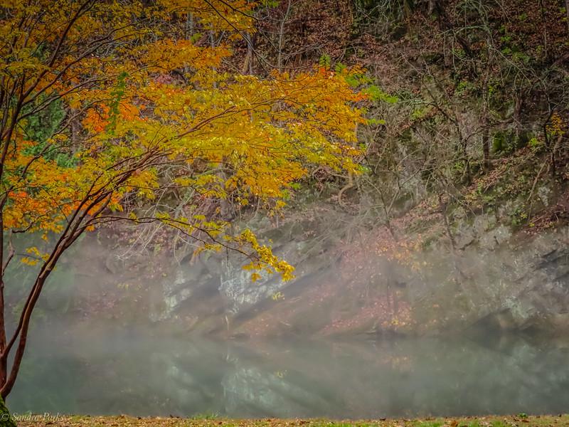 11-11-2020: Fall fog